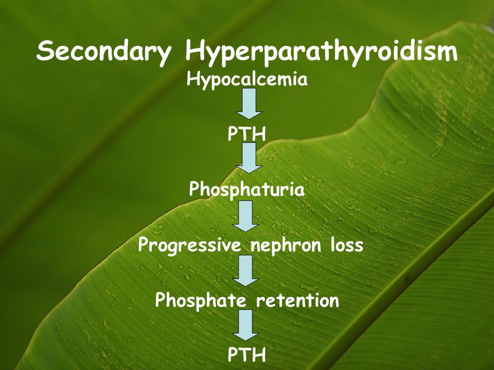 Secondary Hyperparathyroidism Hypocalcemia PTH Phosphaturia Progressive nephron loss Phosphate retention PTH