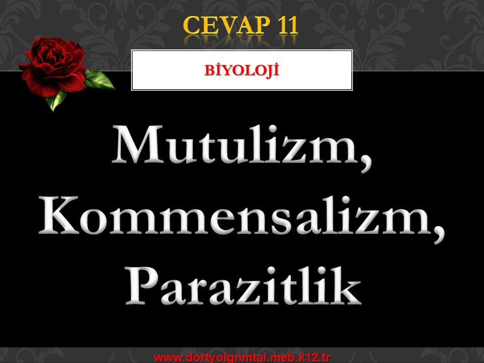 www.dortyolgnmtal.meb.k12.tr BİYOLOJİ