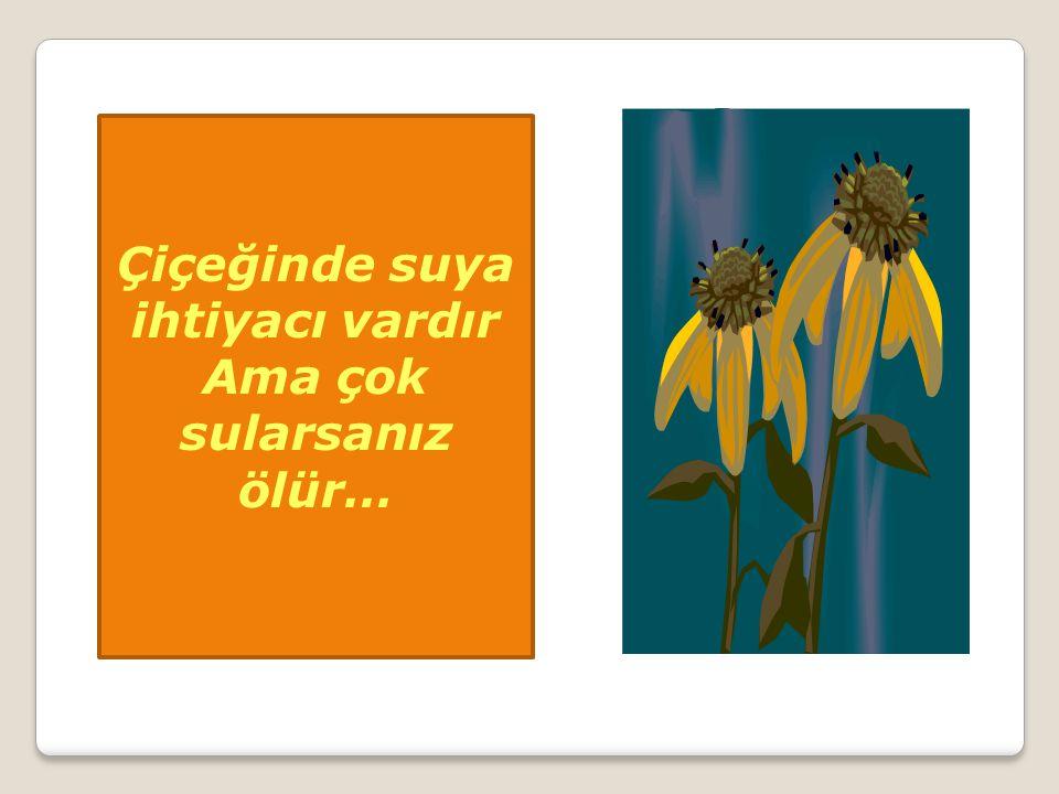 Çiçeğinde suya ihtiyacı vardır Ama çok sularsanız ölür…