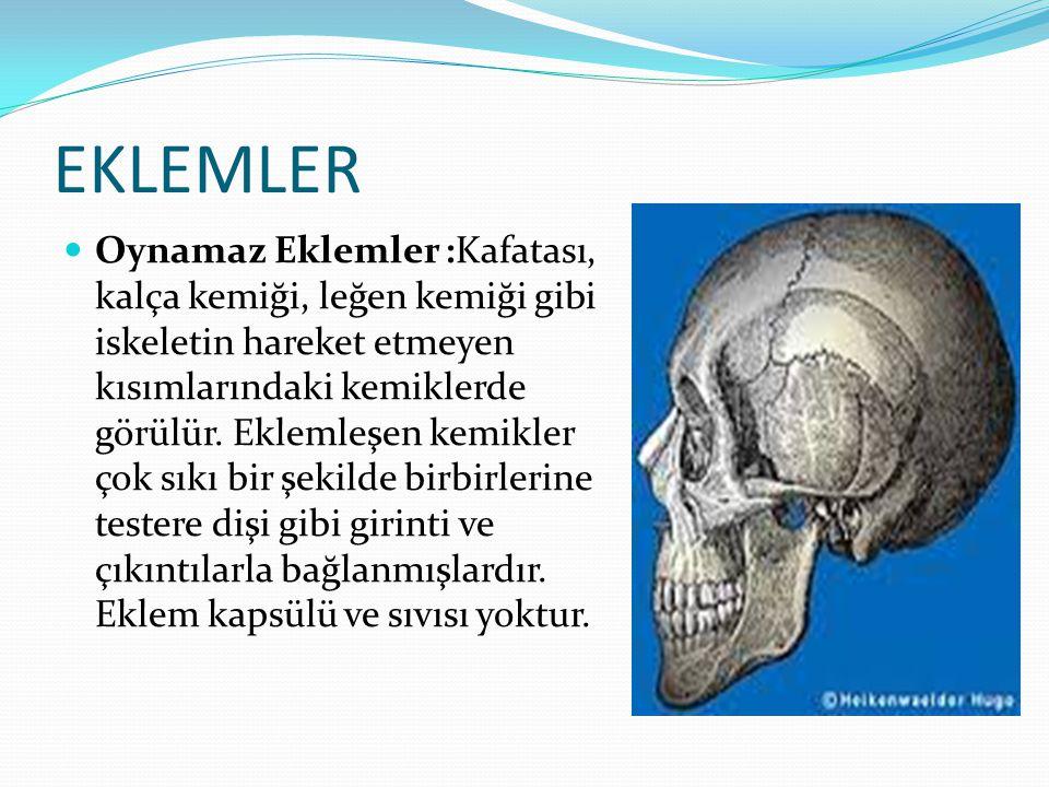 EKLEMLER Oynamaz Eklemler :Kafatası, kalça kemiği, leğen kemiği gibi iskeletin hareket etmeyen kısımlarındaki kemiklerde görülür. Eklemleşen kemikler