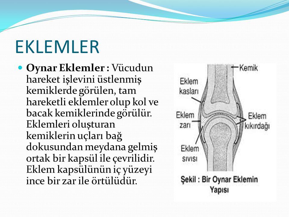 EKLEMLER Oynar Eklemler : Vücudun hareket işlevini üstlenmiş kemiklerde görülen, tam hareketli eklemler olup kol ve bacak kemiklerinde görülür. Ekleml
