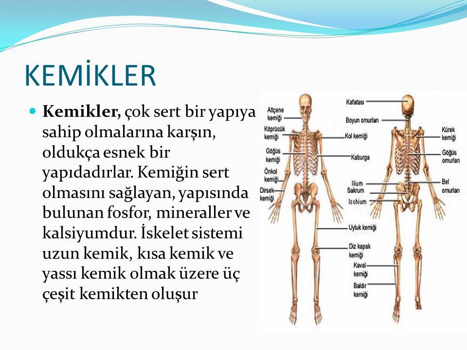 KEMİKLER Kemikler, çok sert bir yapıya sahip olmalarına karşın, oldukça esnek bir yapıdadırlar. Kemiğin sert olmasını sağlayan, yapısında bulunan fosf