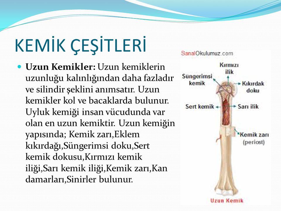 KEMİK ÇEŞİTLERİ Uzun Kemikler: Uzun kemiklerin uzunluğu kalınlığından daha fazladır ve silindir şeklini anımsatır. Uzun kemikler kol ve bacaklarda bul