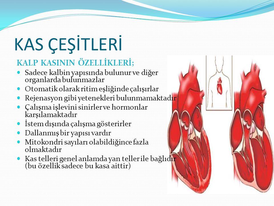 KAS ÇEŞİTLERİ KALP KASININ ÖZELLİKLERİ; Sadece kalbin yapısında bulunur ve diğer organlarda bulunmazlar Otomatik olarak ritim eşliğinde çalışırlar Rej