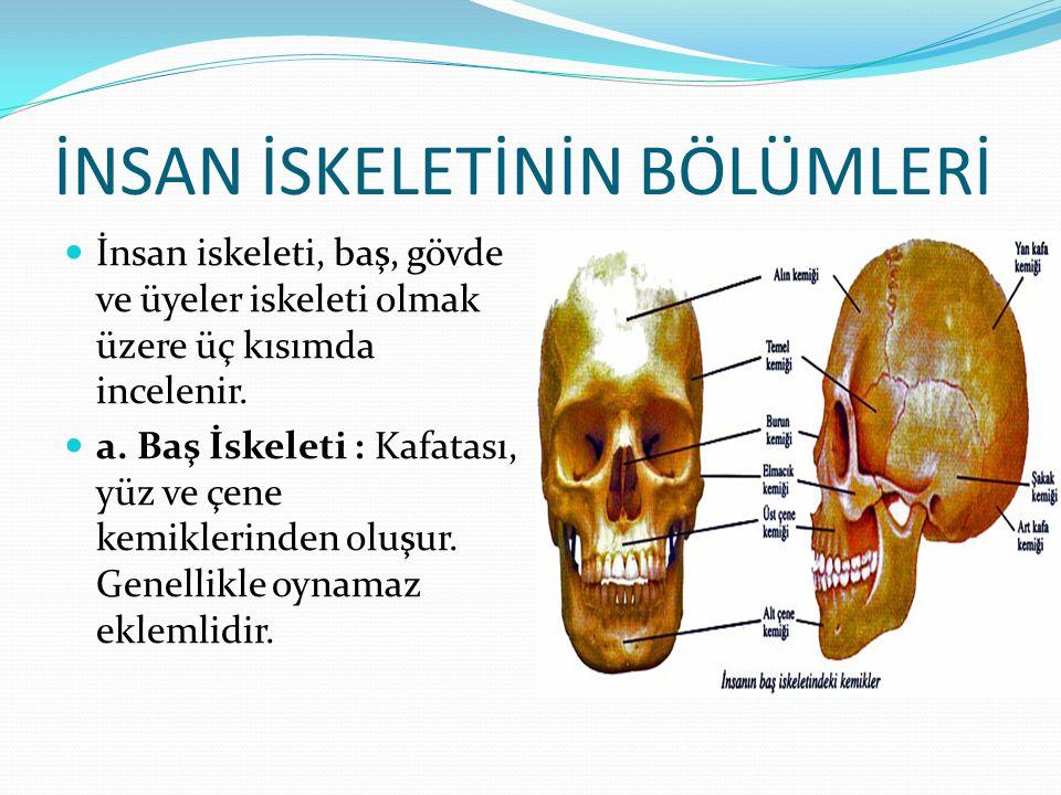 İNSAN İSKELETİNİN BÖLÜMLERİ İnsan iskeleti, baş, gövde ve üyeler iskeleti olmak üzere üç kısımda incelenir. a. Baş İskeleti : Kafatası, yüz ve çene ke