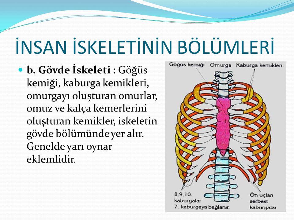 İNSAN İSKELETİNİN BÖLÜMLERİ b. Gövde İskeleti : Göğüs kemiği, kaburga kemikleri, omurgayı oluşturan omurlar, omuz ve kalça kemerlerini oluşturan kemik