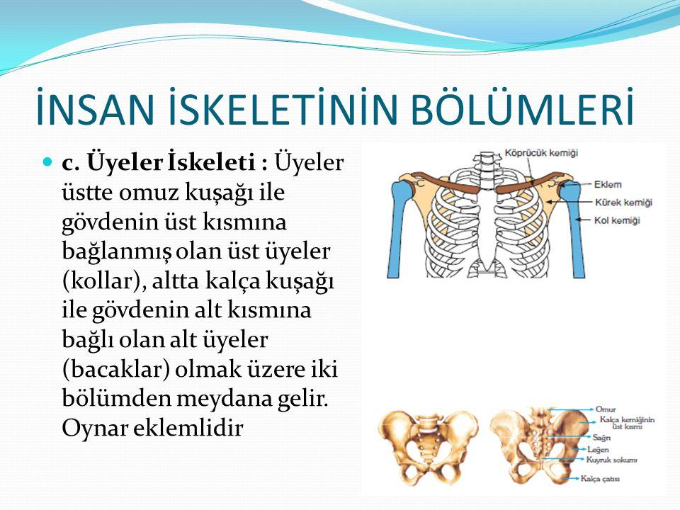 EKLEMLER Oynamaz Eklemler :Kafatası, kalça kemiği, leğen kemiği gibi iskeletin hareket etmeyen kısımlarındaki kemiklerde görülür.