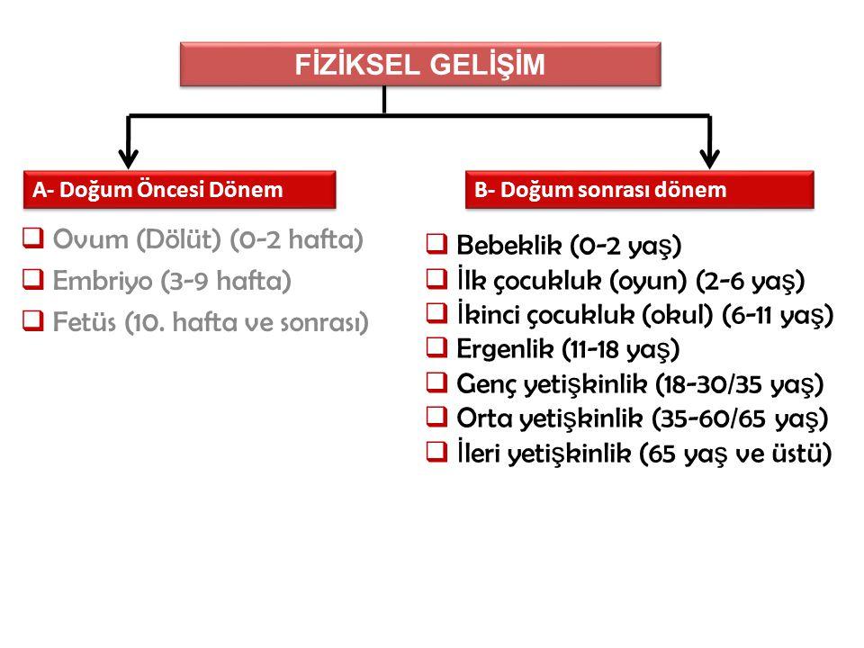  Ovum (Dölüt) (0-2 hafta)  Embriyo (3-9 hafta)  Fetüs (10.