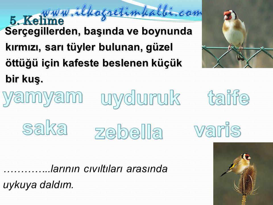 5. Kelime Serçegillerden, başında ve boynunda kırmızı, sarı tüyler bulunan, güzel öttüğü için kafeste beslenen küçük bir kuş. …………..larının cıvıltılar