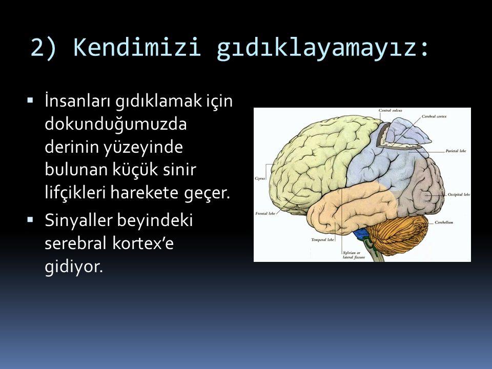 Yapacağımız hareketin bilgisine sahip olmak  Vücut organlarımızın primer motor kortexdeki kaplamış olduğu alan