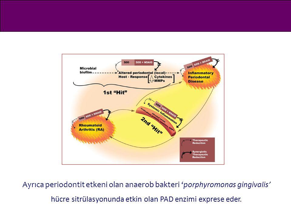 Ayrıca periodontit etkeni olan anaerob bakteri 'porphyromonas gingivalis' hücre sitrülasyonunda etkin olan PAD enzimi exprese eder.