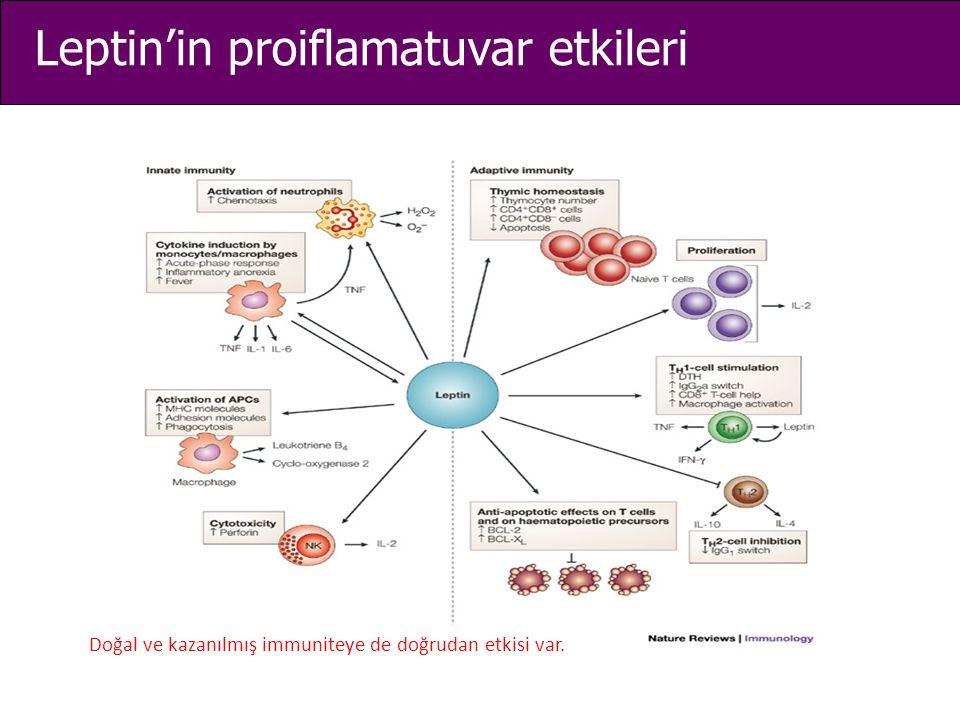 Leptin'in proiflamatuvar etkileri Doğal ve kazanılmış immuniteye de doğrudan etkisi var.
