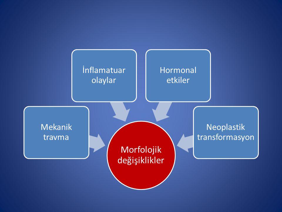 Morfolojik değişiklikler Mekanik travma İnflamatuar olaylar Hormonal etkiler Neoplastik transformasyon