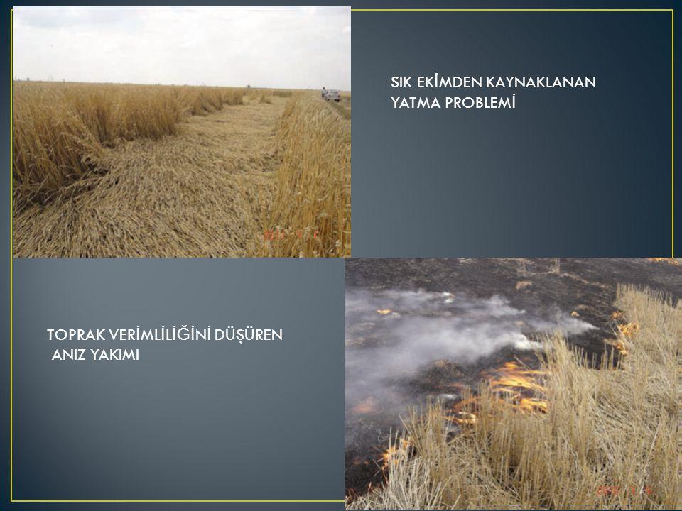 Gerek nadas-tahıl sisteminin gerekse her yıl tahıl tarımının yapıldı ğ ı kuru tarım alanlarında tohumların uygun çimlenme ve çıkış ortamı hazırlayacak şekilde, su kaybını en aza indiren, toprak yapısını en az bozan, erozyonu önemli ölçüde azaltan topra ğ ı devirmeksizin yüzlek olarak alttan işleyen aletlerle bölgeler için uygun zamanda yapılacak toprak işlemesi; Ekim makinelerinin daha rahat çalışabilmesi Daha iyi bir tohum yata ğ ı hazırlanması Çimlenme ve çıkışın daha düzgün olması Verimin güvence altına alınması Gibi birçok fayda sa ğ layacaktır.