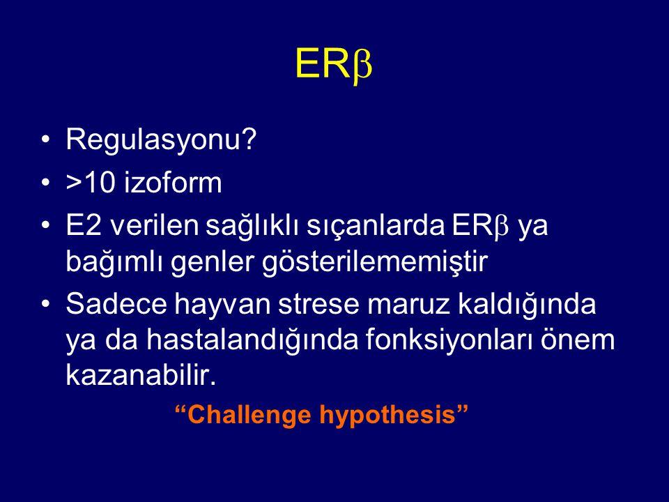 ER  Regulasyonu? >10 izoform E2 verilen sağlıklı sıçanlarda ER  ya bağımlı genler gösterilememiştir Sadece hayvan strese maruz kaldığında ya da hast