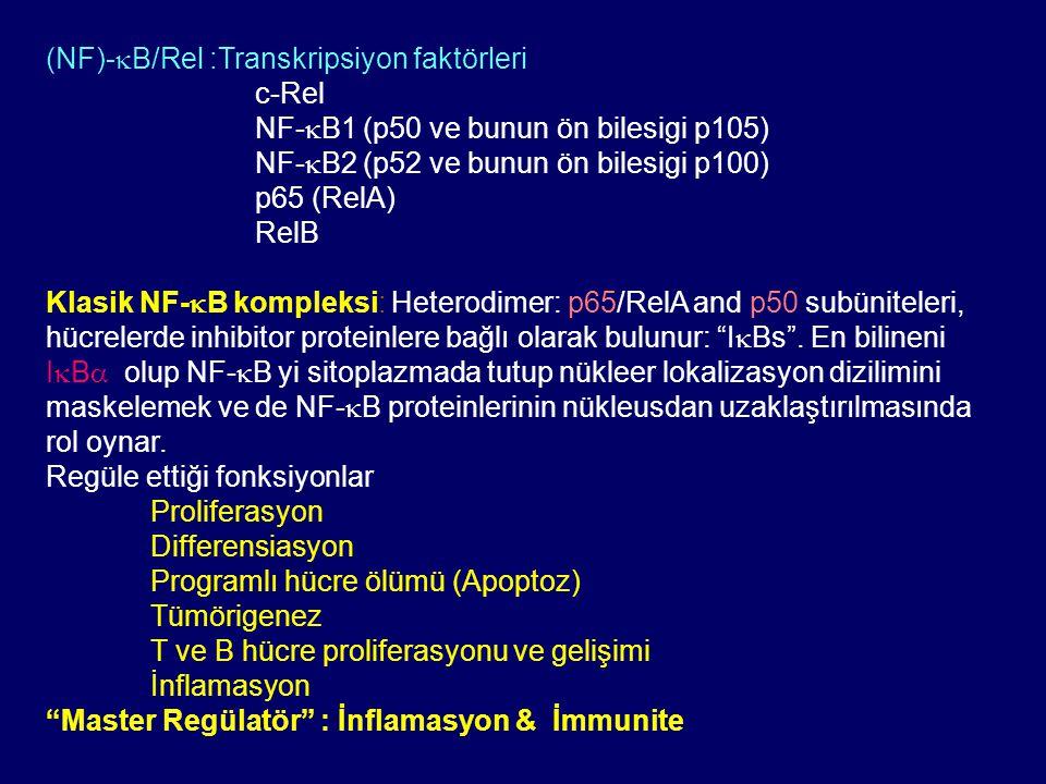 (NF)-  B/Rel :Transkripsiyon faktörleri c-Rel NF-  B1 (p50 ve bunun ön bilesigi p105) NF-  B2 (p52 ve bunun ön bilesigi p100) p65 (RelA) RelB Klasi