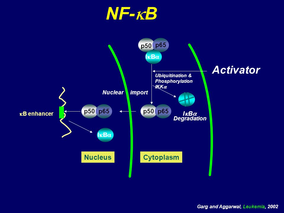 NF-  B Aktivatörleri NF-  B Stress (pH, hypoxia,stress heavy metals) Endotoxin (LPS) Carcinogens (e.g: TNF, CSC, DMBA) Apoptosis-inducers Chemotherapeutic agents &  -irradiation Tumor Promoters (PMA) Cytokines (TNF family, IL-1, IL-17, IL-18, EGF) Infection (bacterial/viral; e.g HIV, EBV-LMP, HTLV1, via TLRs) ROS inducers (H2O2, free iron, heme) Aggarwal BB, Cancer Cell, 2004