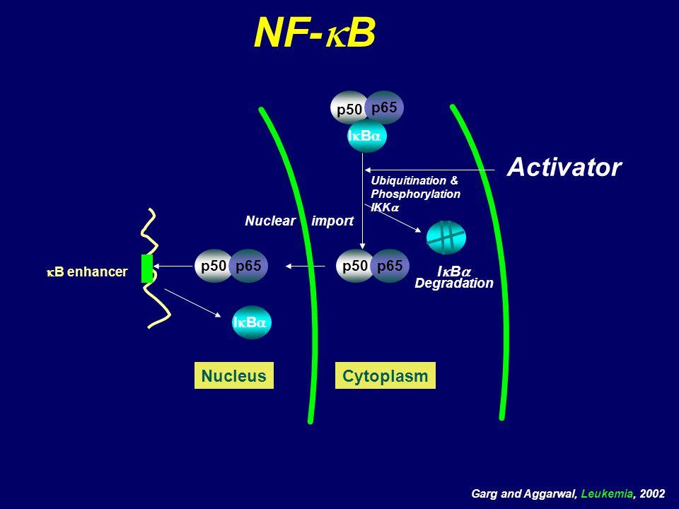 NF-  B Cytoplasm  B enhancer Activator p50 IBIB p65 p50 IBIB p65p50p65 Nucleus Nuclear import Degradation Ubiquitination & Phosphorylation I