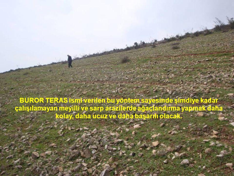 BUROR TERAS ismi verilen bu yöntem sayesinde şimdiye kadar çalışılamayan meyilli ve sarp arazilerde ağaçlandırma yapmak daha kolay, daha ucuz ve daha