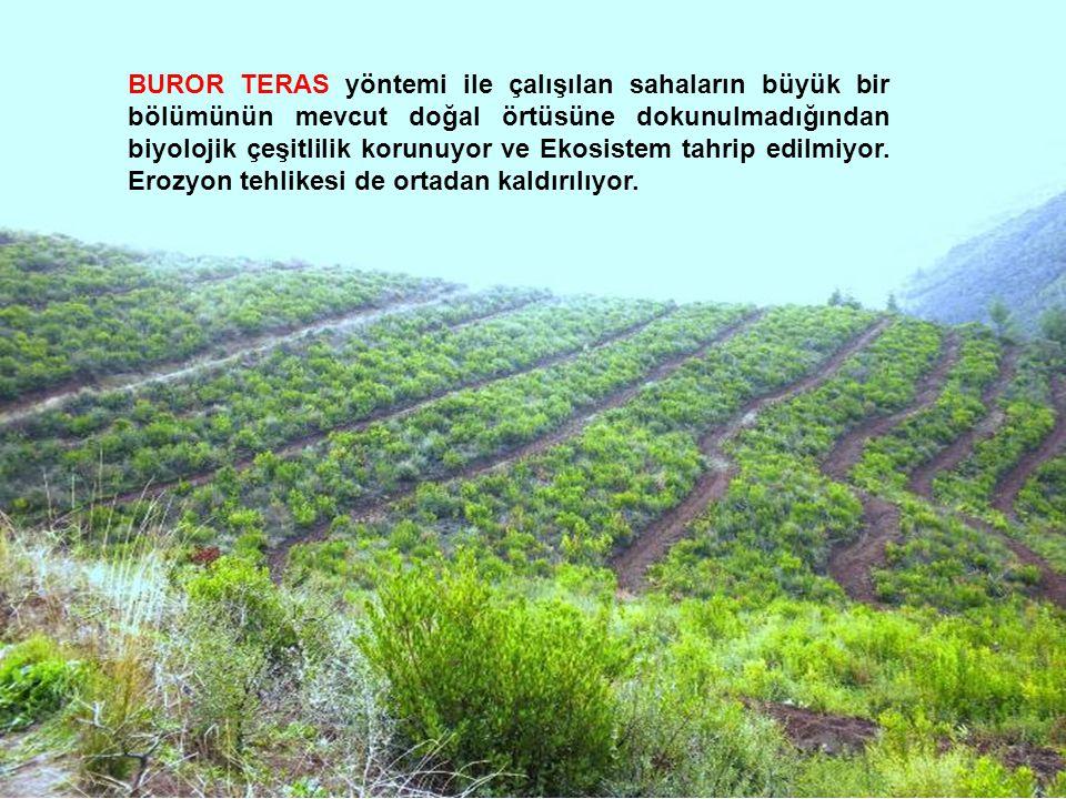 BUROR TERAS yöntemi ile çalışılan sahaların büyük bir bölümünün mevcut doğal örtüsüne dokunulmadığından biyolojik çeşitlilik korunuyor ve Ekosistem ta