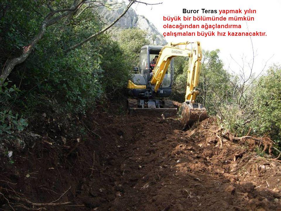 Buror Teras yapmak yılın büyük bir bölümünde mümkün olacağından ağaçlandırma çalışmaları büyük hız kazanacaktır.