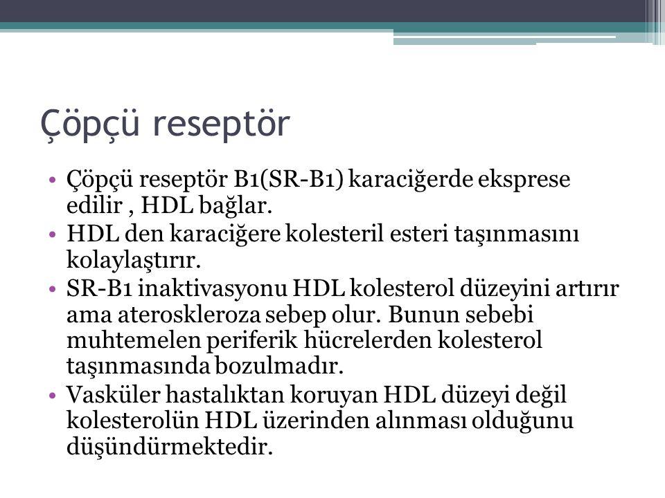 Çöpçü reseptör Çöpçü reseptör B1(SR-B1) karaciğerde eksprese edilir, HDL bağlar. HDL den karaciğere kolesteril esteri taşınmasını kolaylaştırır. SR-B1