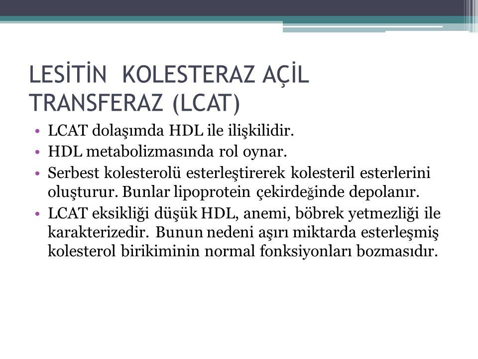 LESİTİN KOLESTERAZ AÇİL TRANSFERAZ (LCAT) LCAT dolaşımda HDL ile ilişkilidir. HDL metabolizmasında rol oynar. Serbest kolesterolü esterleştirerek kole