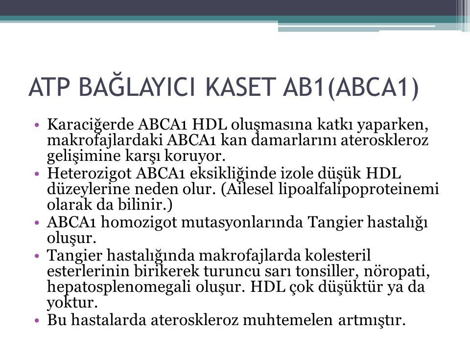 ATP BAĞLAYICI KASET AB1(ABCA1) Karaciğerde ABCA1 HDL oluşmasına katkı yaparken, makrofajlardaki ABCA1 kan damarlarını ateroskleroz gelişimine karşı ko