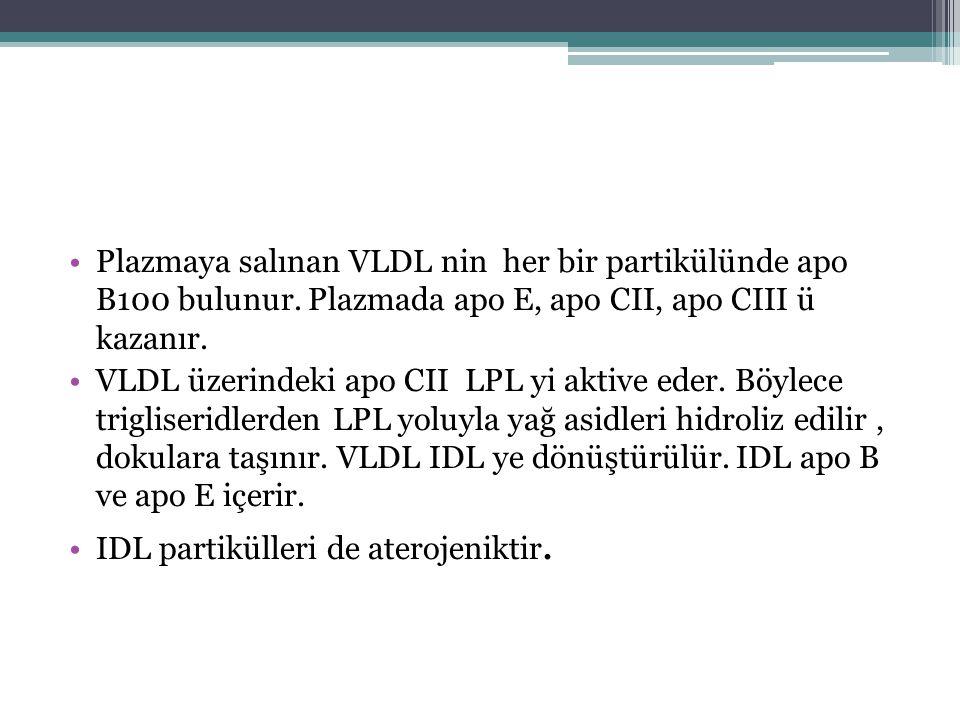Plazmaya salınan VLDL nin her bir partikülünde apo B100 bulunur. Plazmada apo E, apo CII, apo CIII ü kazanır. VLDL üzerindeki apo CII LPL yi aktive ed