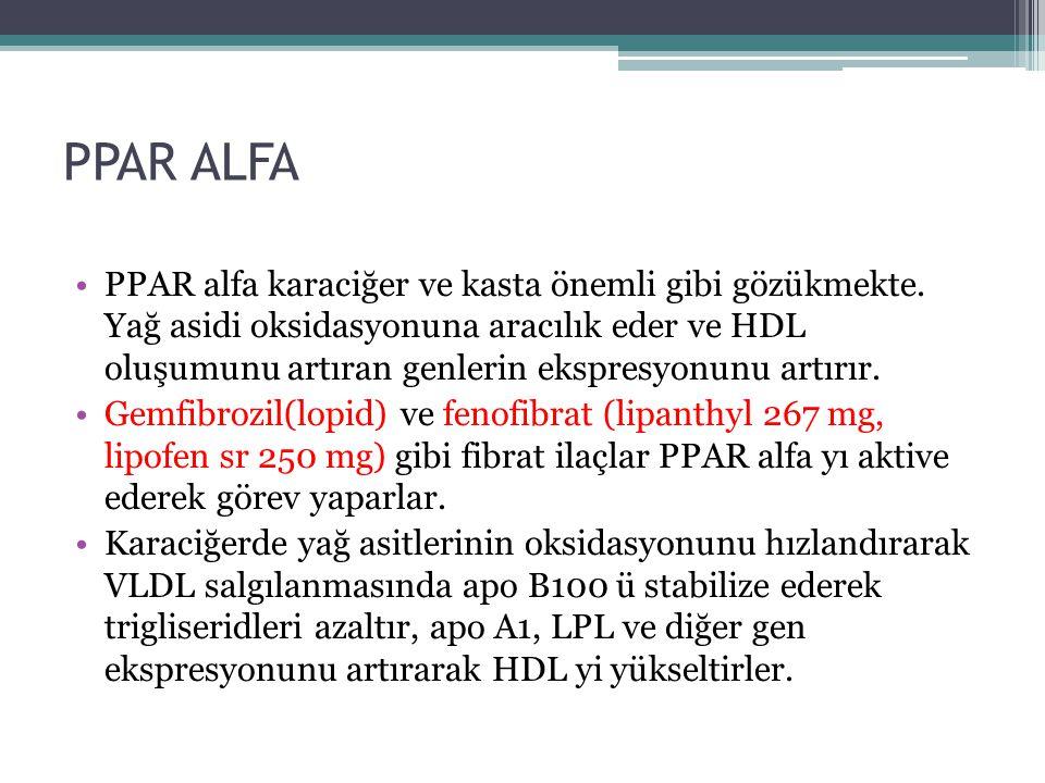 PPAR ALFA PPAR alfa karaciğer ve kasta önemli gibi gözükmekte. Yağ asidi oksidasyonuna aracılık eder ve HDL oluşumunu artıran genlerin ekspresyonunu a