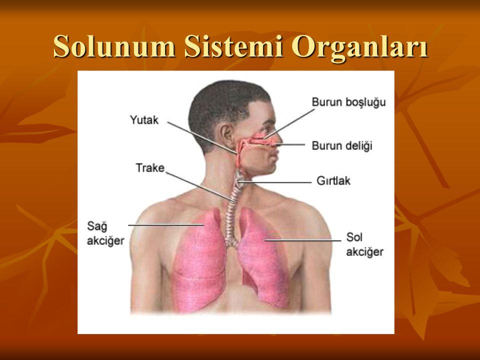 Astma krizinin önlenmesi için profilaktik olarak kullanılırlar.