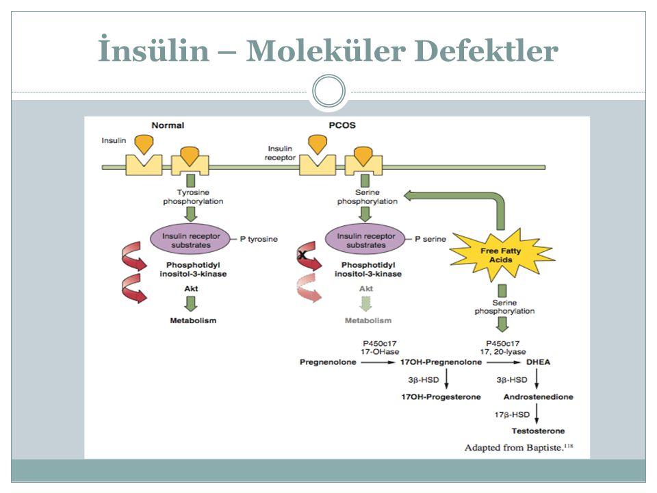 İnsülin – Moleküler Defektler