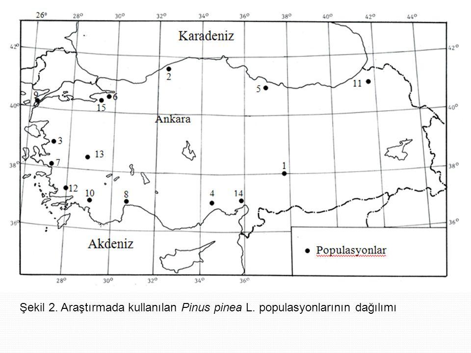Şekil 2. Araştırmada kullanılan Pinus pinea L. populasyonlarının dağılımı