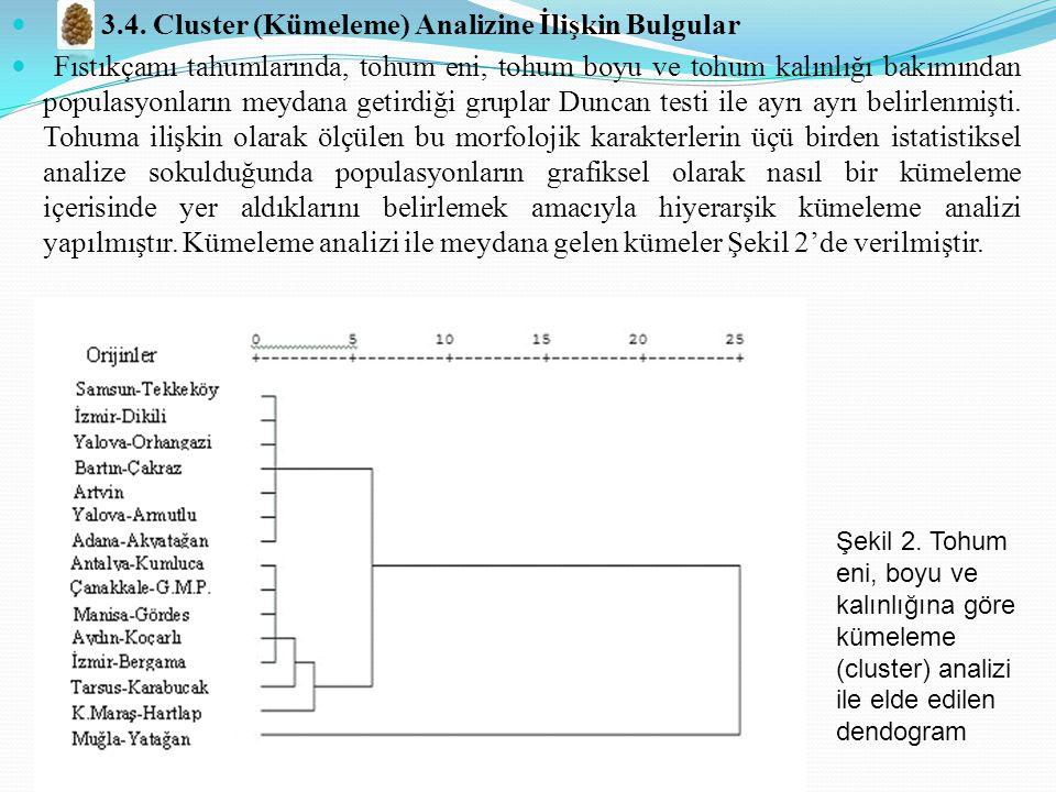3.4. Cluster (Kümeleme) Analizine İlişkin Bulgular Fıstıkçamı tahumlarında, tohum eni, tohum boyu ve tohum kalınlığı bakımından populasyonların meydan
