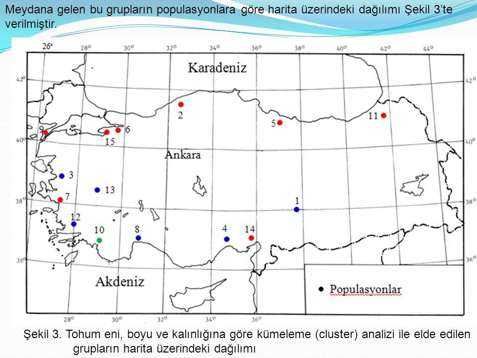 Şekil 3. Tohum eni, boyu ve kalınlığına göre kümeleme (cluster) analizi ile elde edilen grupların harita üzerindeki dağılımı Meydana gelen bu grupları