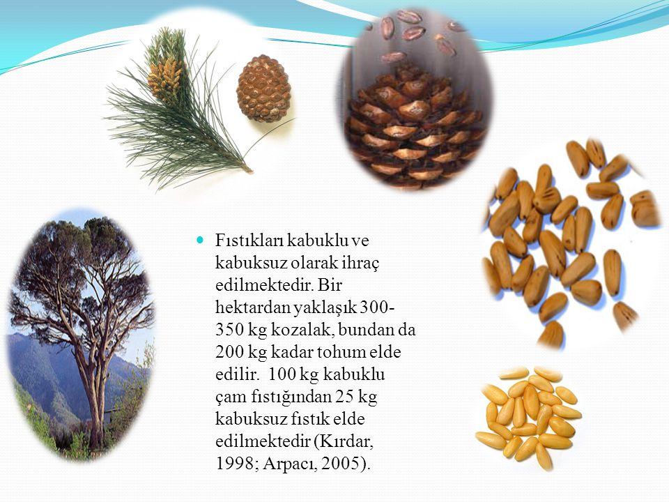 Fıstıkları kabuklu ve kabuksuz olarak ihraç edilmektedir. Bir hektardan yaklaşık 300- 350 kg kozalak, bundan da 200 kg kadar tohum elde edilir. 100 kg