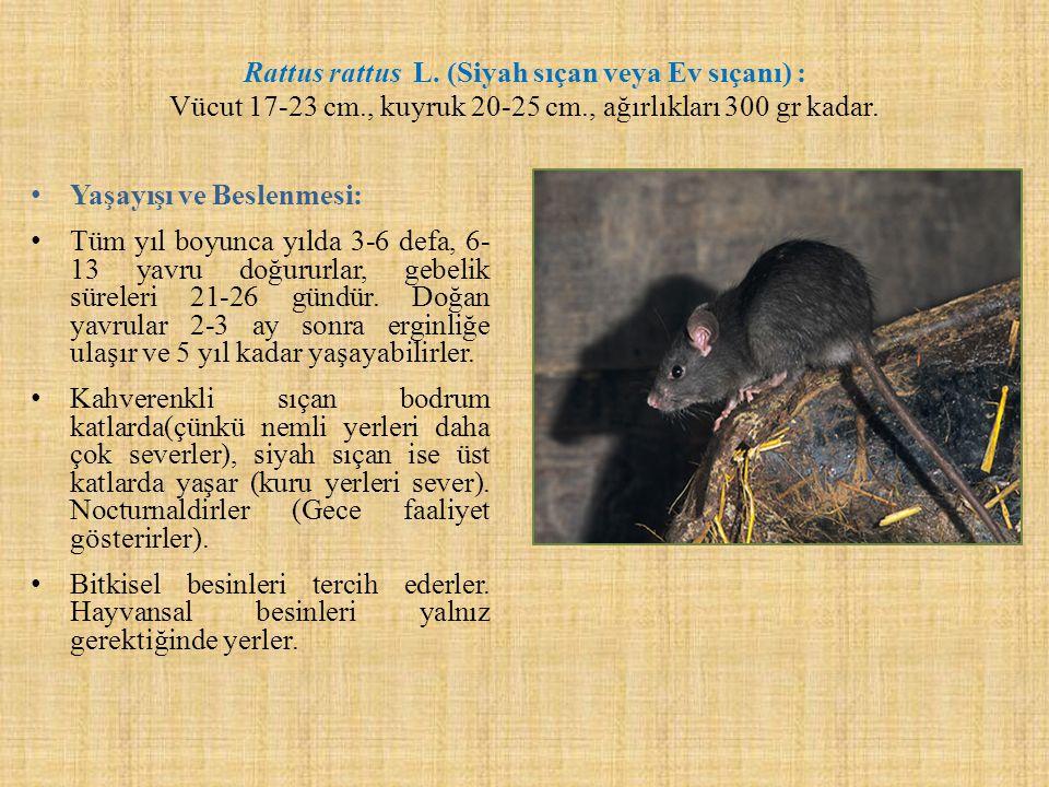 Rattus rattus L. (Siyah sıçan veya Ev sıçanı) : Vücut 17-23 cm., kuyruk 20-25 cm., ağırlıkları 300 gr kadar. Yaşayışı ve Beslenmesi: Tüm yıl boyunca y