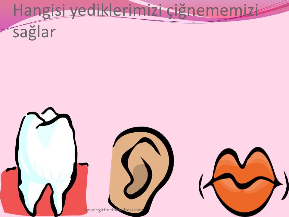 Hangisi yediklerimizi çiğnememizi sağlar www.egitimcininadresi.com
