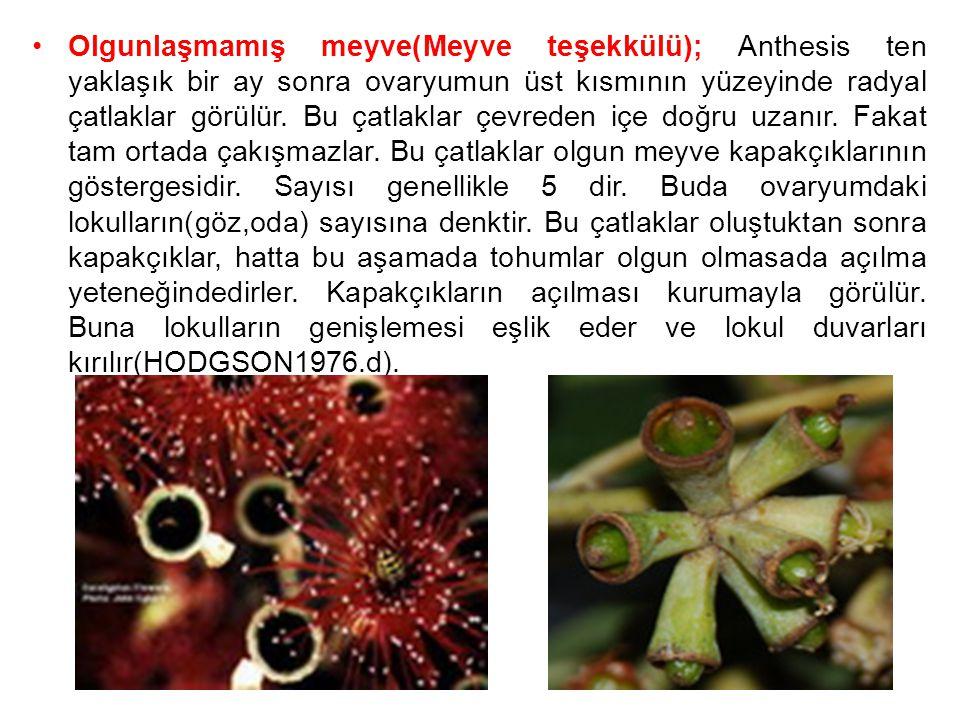 Olgunlaşmamış meyve(Meyve teşekkülü); Anthesis ten yaklaşık bir ay sonra ovaryumun üst kısmının yüzeyinde radyal çatlaklar görülür. Bu çatlaklar çevre