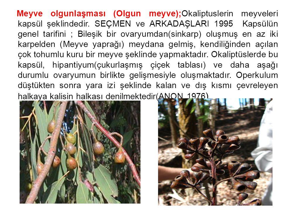Meyve olgunlaşması (Olgun meyve);Okaliptuslerin meyveleri kapsül şeklindedir. SEÇMEN ve ARKADAŞLARI 1995 Kapsülün genel tarifini ; Bileşik bir ovaryum