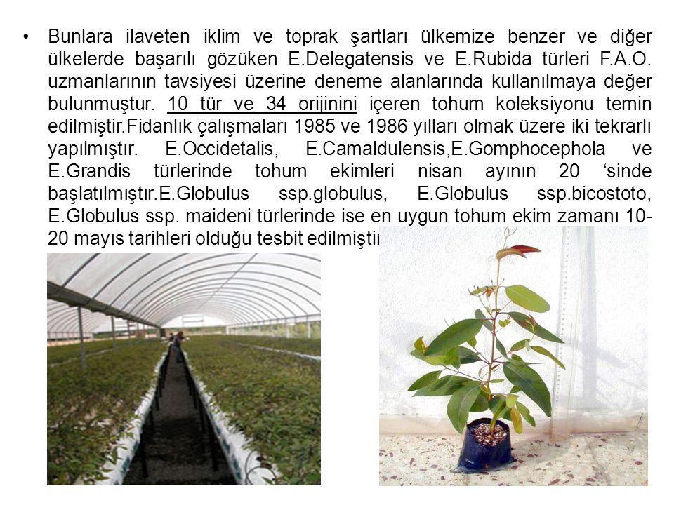Bunlara ilaveten iklim ve toprak şartları ülkemize benzer ve diğer ülkelerde başarılı gözüken E.Delegatensis ve E.Rubida türleri F.A.O. uzmanlarının t