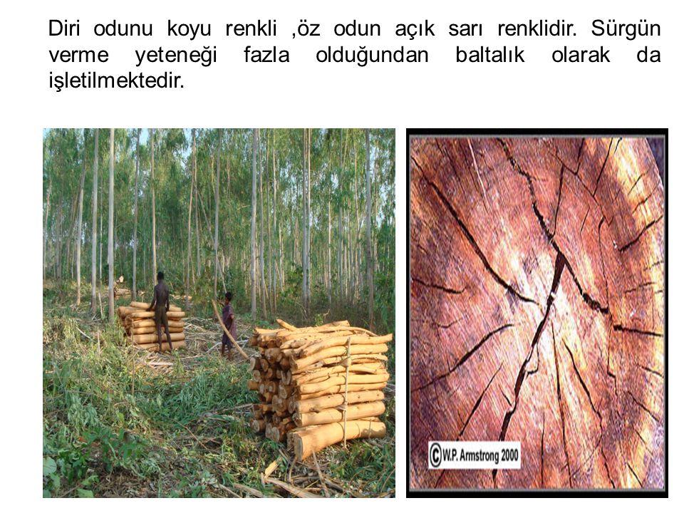 Diri odunu koyu renkli,öz odun açık sarı renklidir. Sürgün verme yeteneği fazla olduğundan baltalık olarak da işletilmektedir.