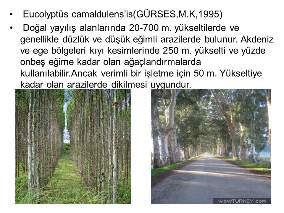 Eucolyptüs camaldulens'is(GÜRSES,M.K,1995) Doğal yayılış alanlarında 20-700 m. yükseltilerde ve genellikle düzlük ve düşük eğimli arazilerde bulunur.