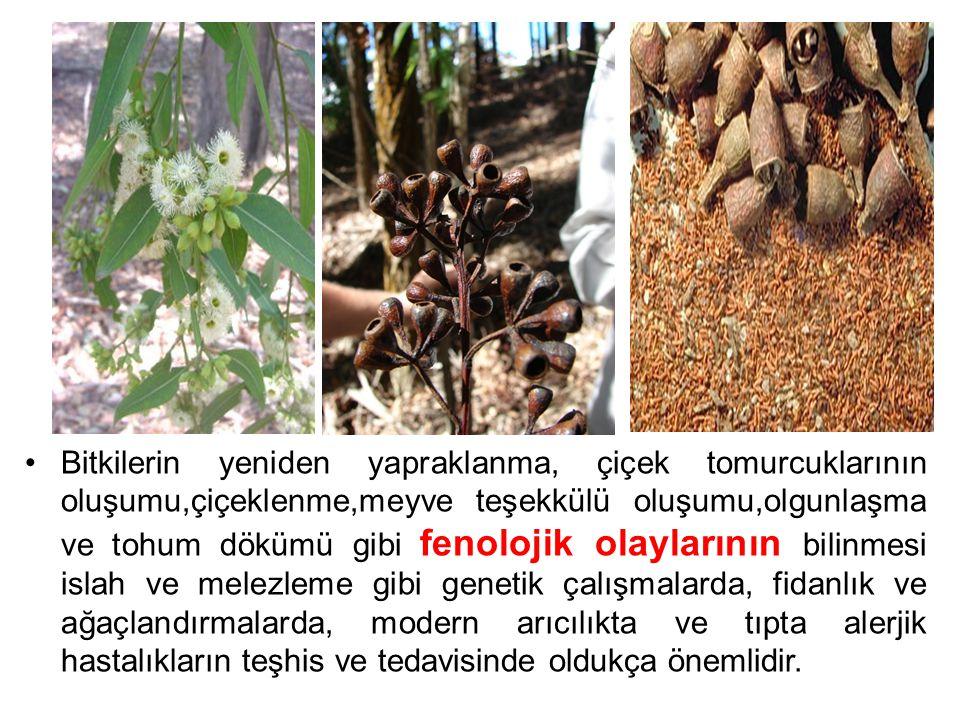 Bitkilerin yeniden yapraklanma, çiçek tomurcuklarının oluşumu,çiçeklenme,meyve teşekkülü oluşumu,olgunlaşma ve tohum dökümü gibi fenolojik olaylarının