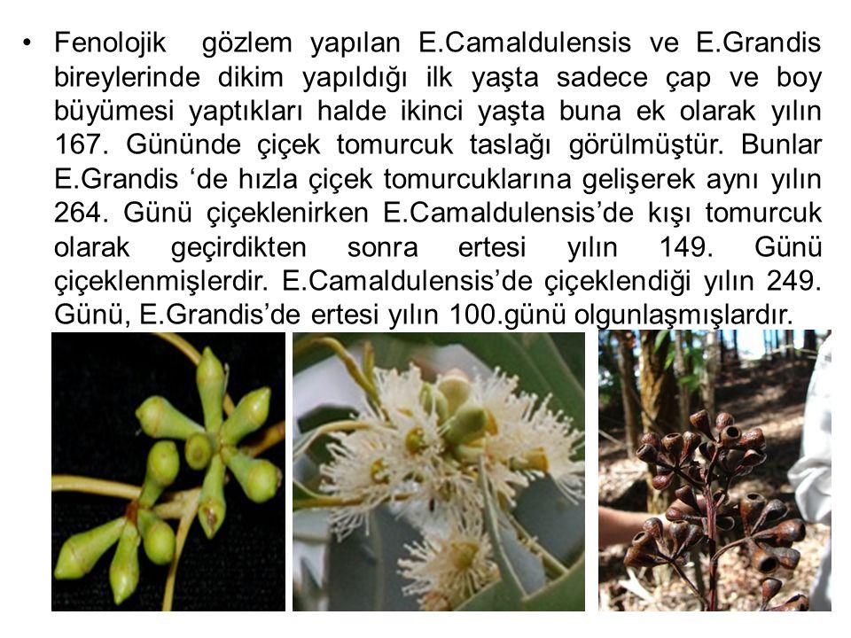 Fenolojik gözlem yapılan E.Camaldulensis ve E.Grandis bireylerinde dikim yapıldığı ilk yaşta sadece çap ve boy büyümesi yaptıkları halde ikinci yaşta