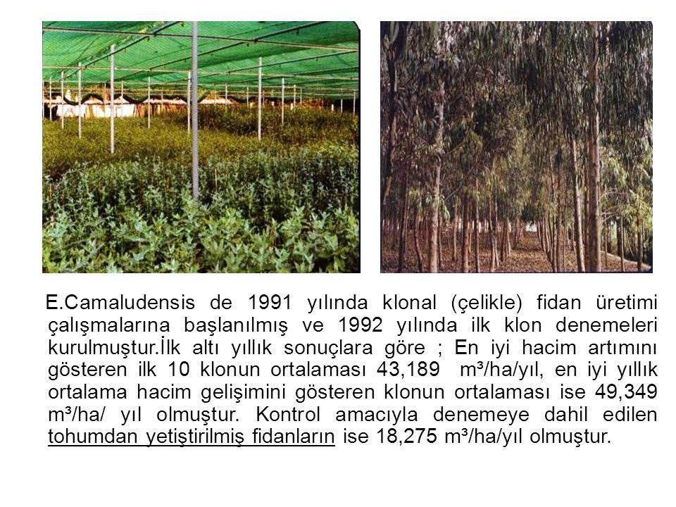 E.Camaludensis de 1991 yılında klonal (çelikle) fidan üretimi çalışmalarına başlanılmış ve 1992 yılında ilk klon denemeleri kurulmuştur.İlk altı yıllı