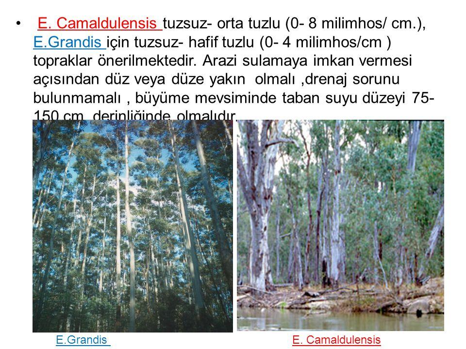 E. Camaldulensis tuzsuz- orta tuzlu (0- 8 milimhos/ cm.), E.Grandis için tuzsuz- hafif tuzlu (0- 4 milimhos/cm ) topraklar önerilmektedir. Arazi sulam