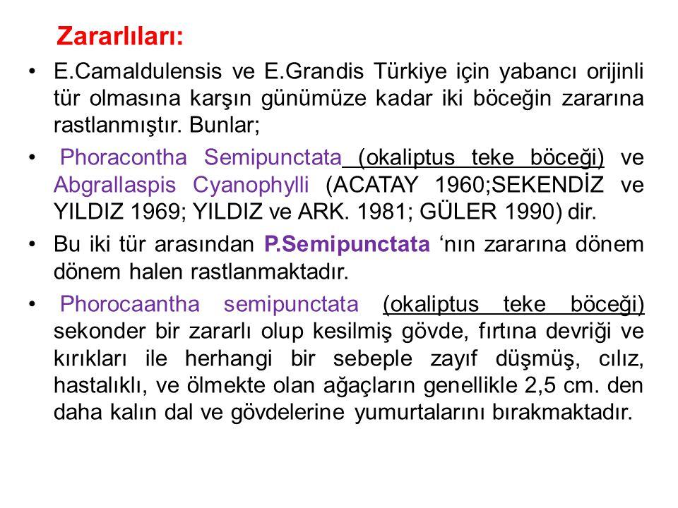 Zararlıları: E.Camaldulensis ve E.Grandis Türkiye için yabancı orijinli tür olmasına karşın günümüze kadar iki böceğin zararına rastlanmıştır. Bunlar;