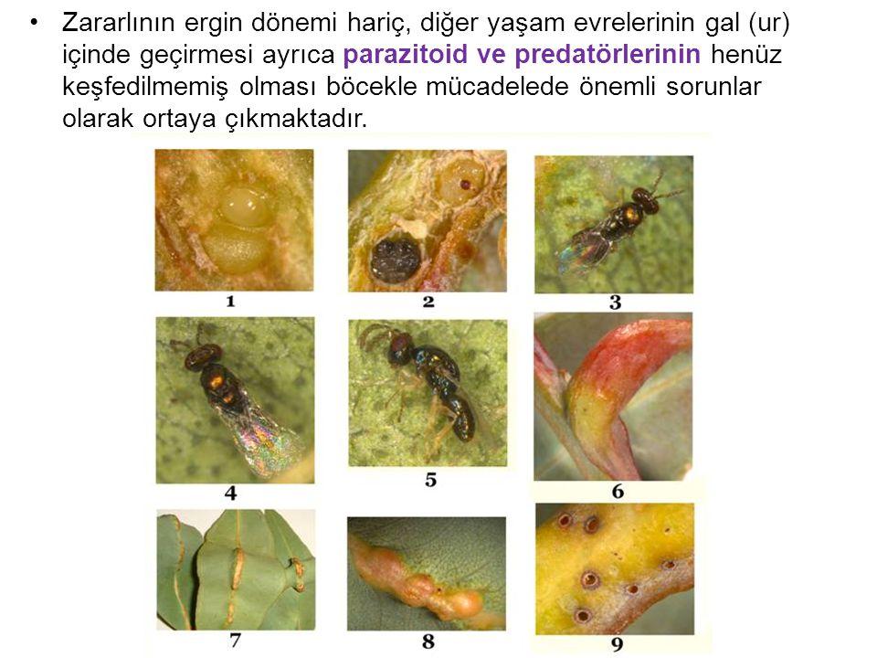 Zararlının ergin dönemi hariç, diğer yaşam evrelerinin gal (ur) içinde geçirmesi ayrıca parazitoid ve predatörlerinin henüz keşfedilmemiş olması böcek
