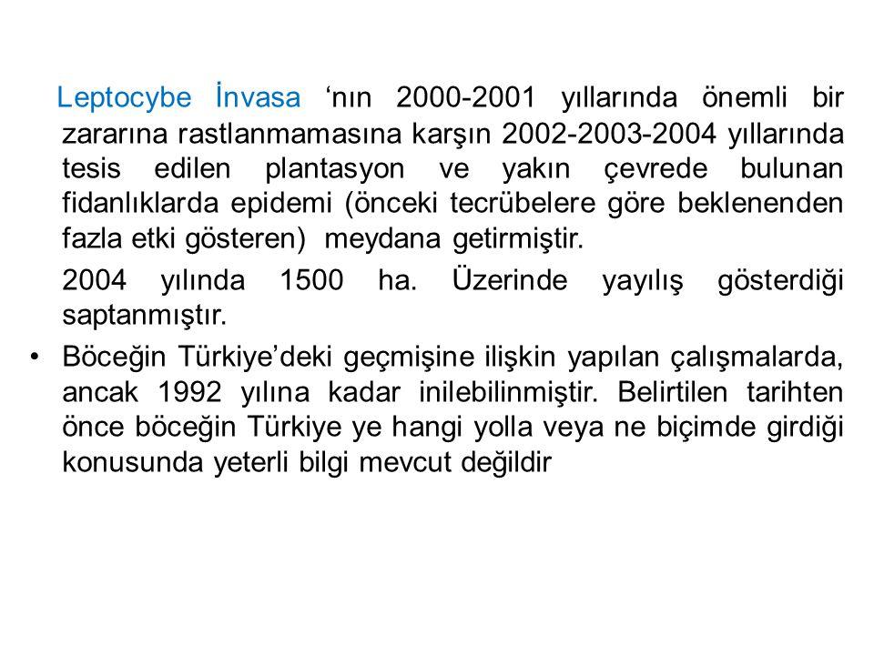 Leptocybe İnvasa 'nın 2000-2001 yıllarında önemli bir zararına rastlanmamasına karşın 2002-2003-2004 yıllarında tesis edilen plantasyon ve yakın çevre